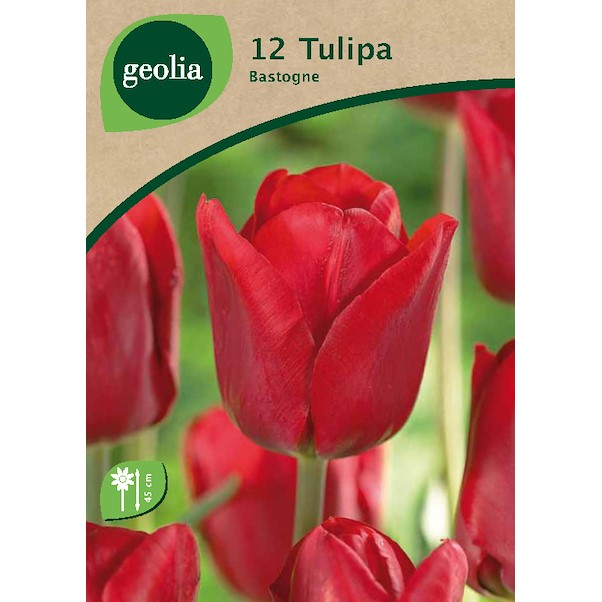 GEOLIA THIOMPHE BASTOGNE 12