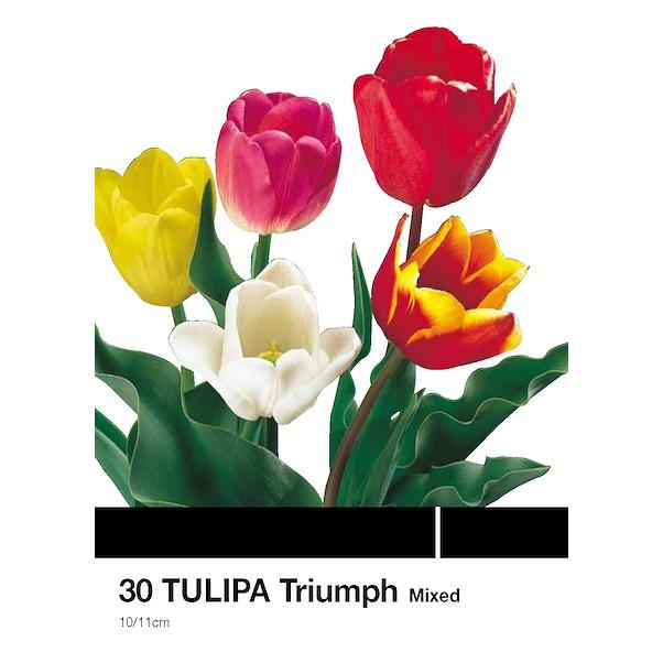 TRIOMPHE MEZCLA 30